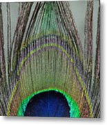 A Peek At A Peacock Feather Metal Print
