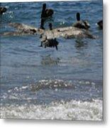 A Pelican In-flight At Playa Manzanillo Metal Print
