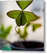 A Piece Of Luck Metal Print