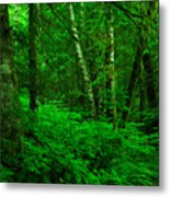 A Place In The Forest Metal Print