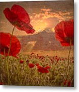 A Poppy Kind Of Morning Metal Print