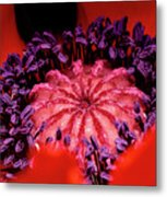 A Poppy's Heart Metal Print