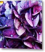 A Puff Of Purple Metal Print
