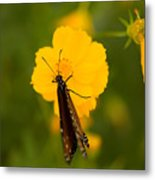 A Queen Butterfly At The Lincoln Metal Print