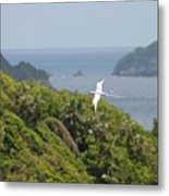A Red-billed Tropicbird (phaethon Metal Print by John Edwards