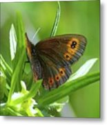 A Red Butterfly Perching  Metal Print