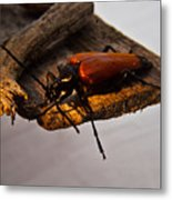 A Red Glowing Beetle Metal Print