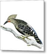A Red Headed Woodpecker 2 Metal Print