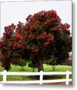 A Red Pin Under A Red Tree At Morro Bay Golf Course Metal Print