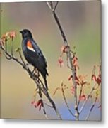 A Red Wing Metal Print