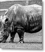 A Rhinoceros Metal Print