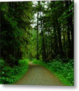 A Road Through The Forest Metal Print