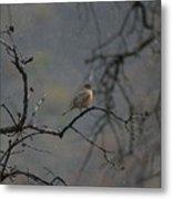 A Robin In Spring Snowfall  Metal Print