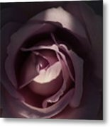 A Rose By Any Name Metal Print