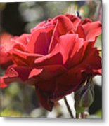 A Rose By Any Other Name-- Metal Print