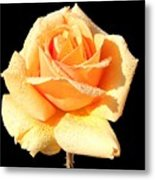 A Rose By Any Other Name Would Smell As Sweet Metal Print