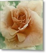 A Rose For Lady Mary Metal Print