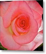 A Rose For Mary Metal Print