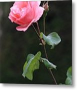 A Rose For Rodin Metal Print
