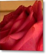 A Rose In Horizonal Metal Print