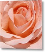 A Rose Is A Rose By Any  Name .... Metal Print