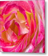 A Rose Is A Rose Metal Print