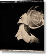 A Rose Is But A Rose  Metal Print