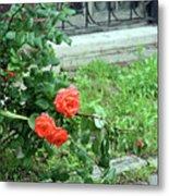 A Rose Is Down Metal Print