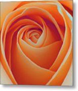 A Rose Like None Other Metal Print