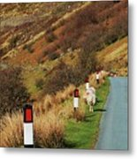 A Rural Vision From Wales Metal Print