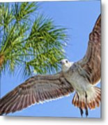 A Seagull Flyby Metal Print