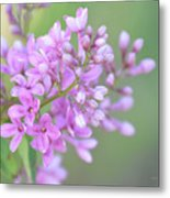 A Shade Of Purple, A Shade Of Spring Metal Print