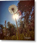 A Shiny Flower Day Metal Print
