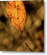 A Single Leaf In The Late Sun Metal Print