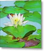 A Single Water Lily Blossom Metal Print