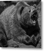 A Slightly Upset Grizzly Bear Metal Print