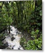 A Small River Flows Through A Dense Metal Print