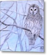A Barred Owl Metal Print