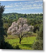 A Solitary Almond Tree Metal Print