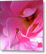 A Spider And A Rose Metal Print