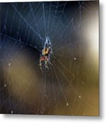 A Spider And Her Web Metal Print