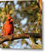 A Spot Of Red In The Trees Metal Print