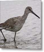 A Spotted Sandpiper Metal Print
