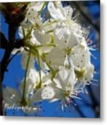 A Spring Delight Metal Print