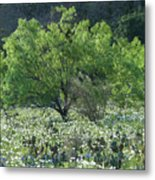 A Spring Scene In Texas. Metal Print
