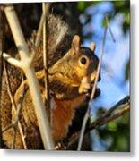 A Squirrel's Feist Metal Print