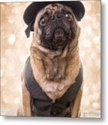 A Star Is Born - Dog Groom Metal Print by Edward Fielding