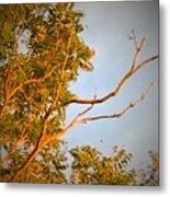 A Sumac Tree And A Bare Branch Metal Print