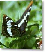 A Summer Butterfly  Metal Print