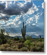 A Summer Day In The Sonoran  Metal Print